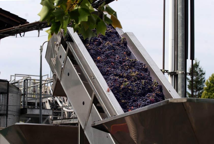 Lading druiven